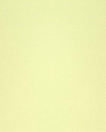 Modigliani Camoscio